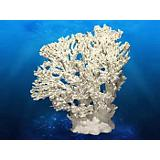Deep Blue Coral Concepts Table Coral