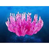 DB Coral Concepts Lg Atlantic Sea Anemone