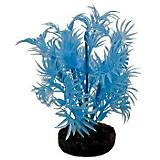 Blue Ribbon Neon Dragon Leaf Plant
