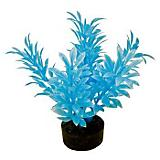 Blue Ribbon Neon Mini Plant