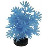 Blue Ribbon Neon Palm Plant