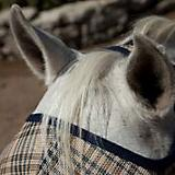 Kensington Fly Mask with Web Trim