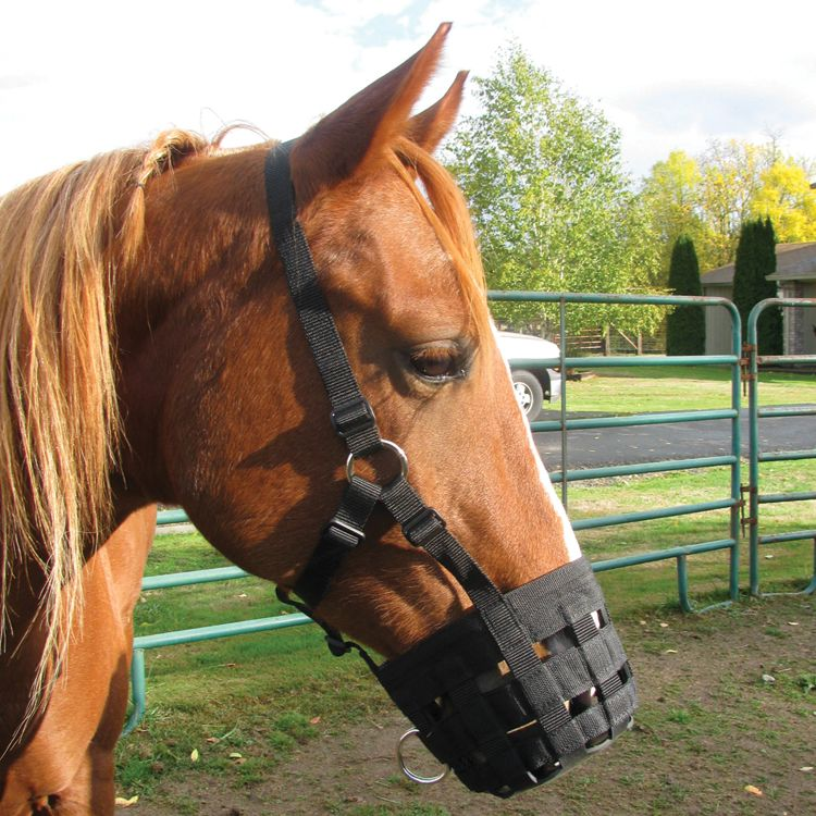 Cashel Halter Grazing Muzzle Pony Best Price
