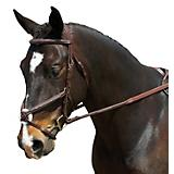 Collegiate Comfort Crown Figure 8 Bridle