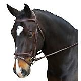 Collegiate Fancy Removable Flash Bridle