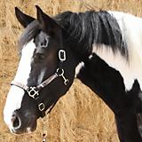 Kensington Draft Halter with Lead