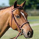 Pessoa Fancy Raised Padded Bridle