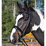 Shires Bheim Patent Flash Bridle