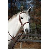 Shires Plain Boston Bridle