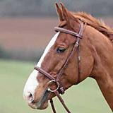 Shires Comfort Crown Lexington Bridle
