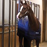 Horseware Blanket Liner 400g