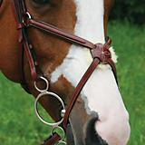 Val du Bois Raised Padded Figure 8 Noseband