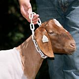 Weaver Plastic Goat Chains