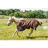 Saxon 1200D Standard Turnout Sheet Chestnut
