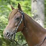 Weaver Untamed Nylon Browband Headstall