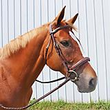 HDR Mono Crown Bridle w.Padded Wide Noseband