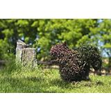Squirrel Topiary Moss