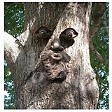 Genuine Tree People Whistlin Pete Tree Face