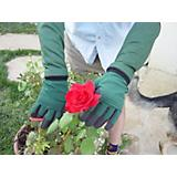 Ladies Ulitmate Rose Glove