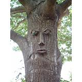 Geniune Tree Peeple Simon Tree Face
