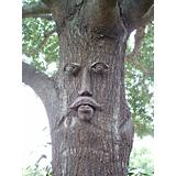 Dagwood Tree Face