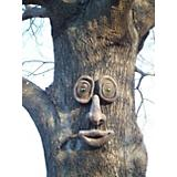 Genuine Tree Peeple Oakley Tree Face