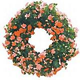 Growing Wreath Coco Moss Liner 16 In