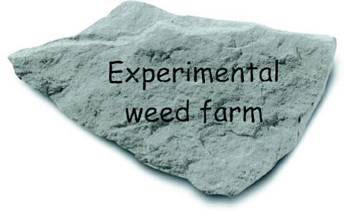 Experimental Weed Farm Accent Rock