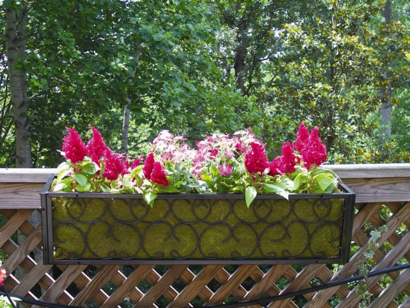 Carolina Planter And Coco Liner