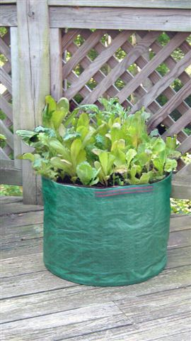Salad Planter Bag