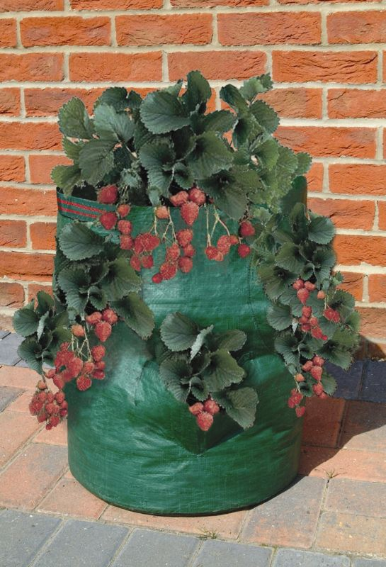 Strawberry And Herb Planter Bag