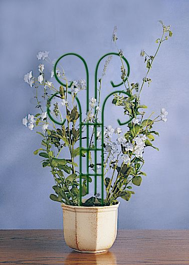 Bosmere Wren 18in Mini Scroll Metal Pot Trellis