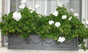 Adam Fiberglass Window Box 60in