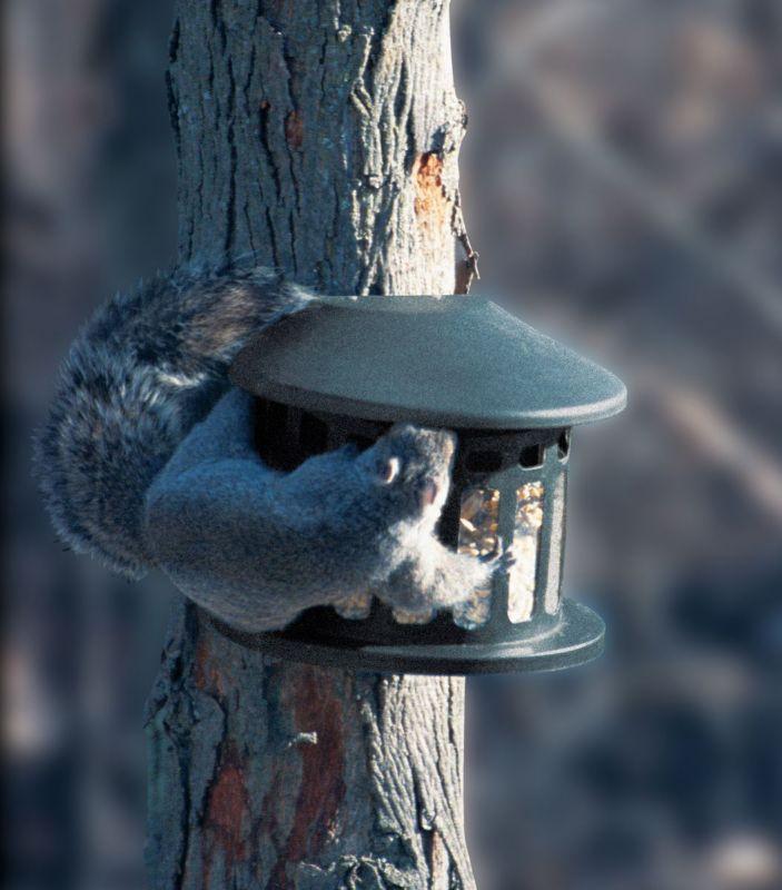Heritage Corn Peanut Squirrel Feeder (HF75590 047977000640 Wild Bird Supplies Bird Feeders) photo