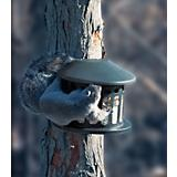Heritage Corn Peanut Squirrel Feeder
