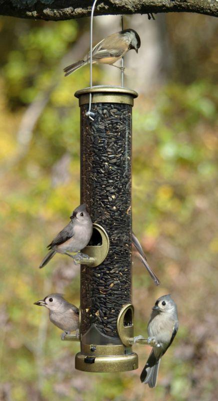 Medium Seed Tube Bird Feeder Brushed Nickel (ASPECTS392 026451123921 Wild Bird Supplies Bird Feeders) photo