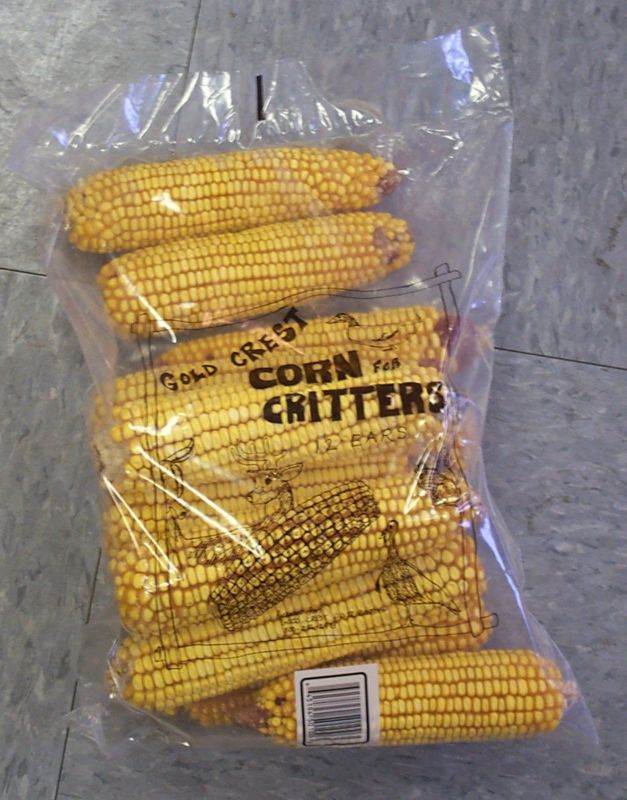 Squirrel Food - Corn On The Cob
