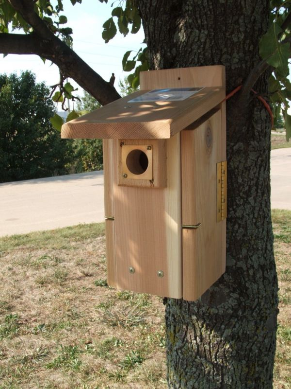 Ultimate Cedar Blue Bird House (SESCS3004RW 645194030046 Wild Bird Supplies Bird Houses) photo