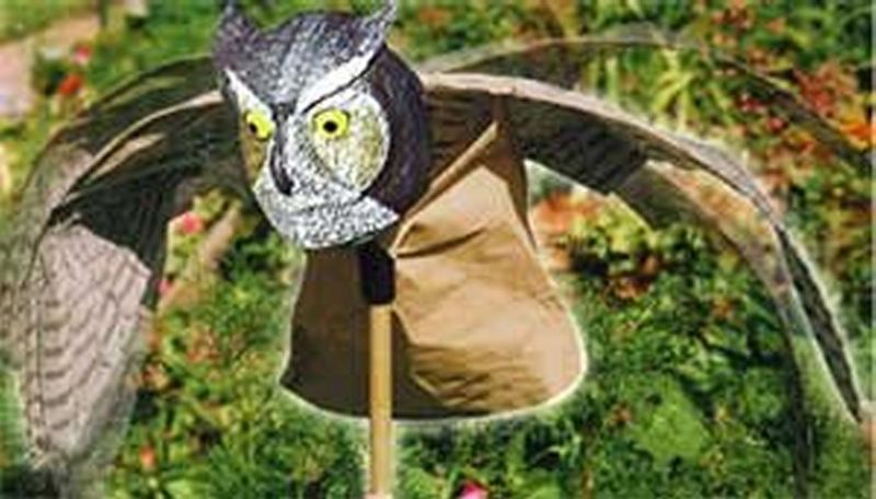 Prowler Owl Bird Repellent