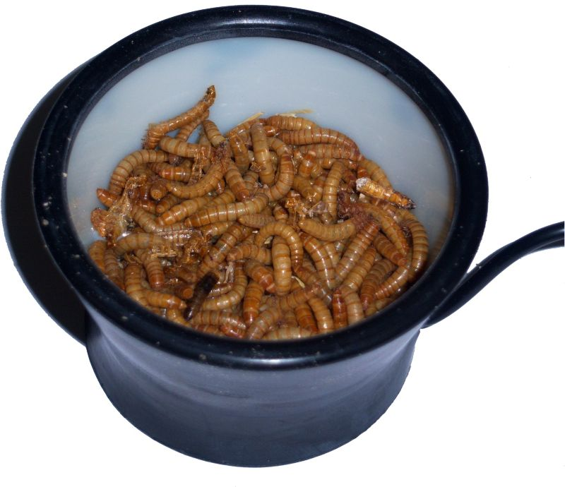 Meal Worm Warmer
