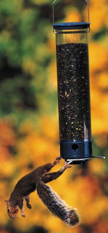 Yankee Whipper 180 Degree (DYYCPW 021964205201 Wild Bird Supplies Bird Feeders) photo