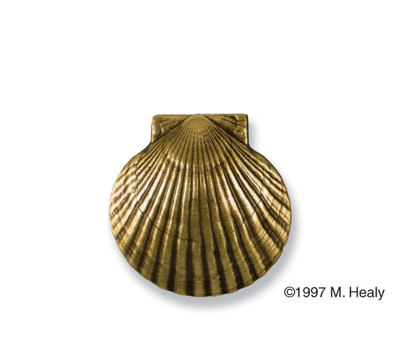 Brass Bay Scallop Door Knocker