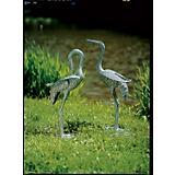 Preening Cranes