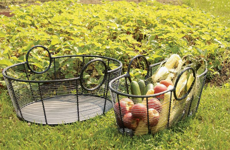 Steel Harvest Basket Large