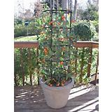 The Ultimate Tomato and Plant Growing Cage