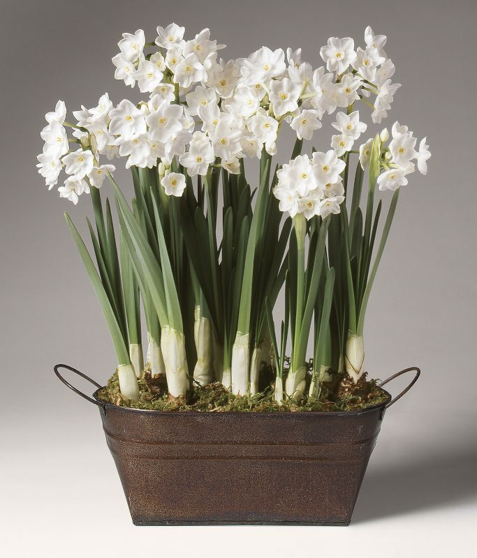 Paperwhites in Copper Tub Pre-Potted Bulb Garden