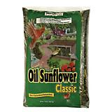 Valley Splendor 10 lbs Oil Sunflower Seed