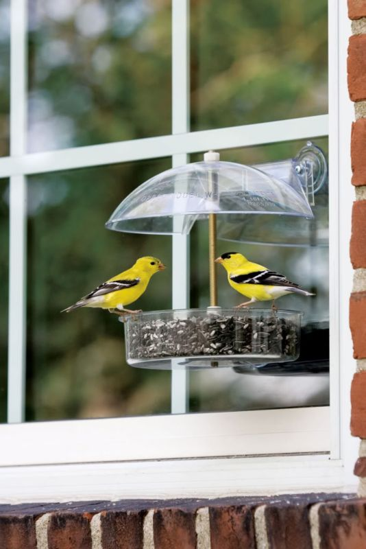 Droll Yankees Winner Window Feeder (DROW1 021964103606 Wild Bird Supplies Bird Feeders) photo