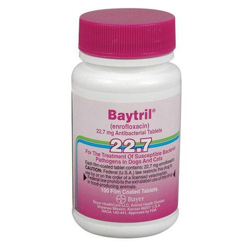 """Baytril Purple Tablets 22.7 mg Enrofloxacin is an antibiotic of the quinolone class. Dogs and Cats: It is used in the treatment of susceptible bacterial infections. Ferrets, Rabbits, Hedgehogs, Chinchillas, Hamsters, Gerbils, Guinea Pigs, Mice, Rats: Enrofloxacin may be used to treat bacteria and mycoplasma infections. Reptiles: Injectable enrofloxacin may be used to treat bacteria infections, especially of the respiratory system. Dose and Administration Always follow the dosage instructions provided by your veterinarian. If you have difficulty giving the medication, contact your veterinarian. Dogs: The nonchewable tablet may be placed in food or given by hand (""""pilled""""). Cats: The tablet should be given by hand. The tablet is bitter and may cause your pet to salivate or refuse treatment. Do not crush the tablet. Monitor after giving the medication orally to be sure all of it was consumed. Use all of the medication prescribed. If the entire course of treatment is not given, the infect"""