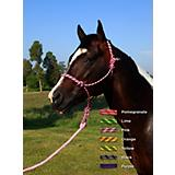 Basic Cool Citrus Poly Rope Halter w/Lead